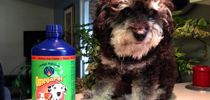 omega pet oil supplement