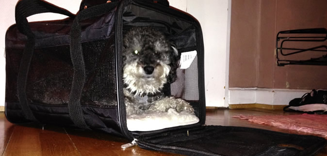 willie in his sherpa pet carrier