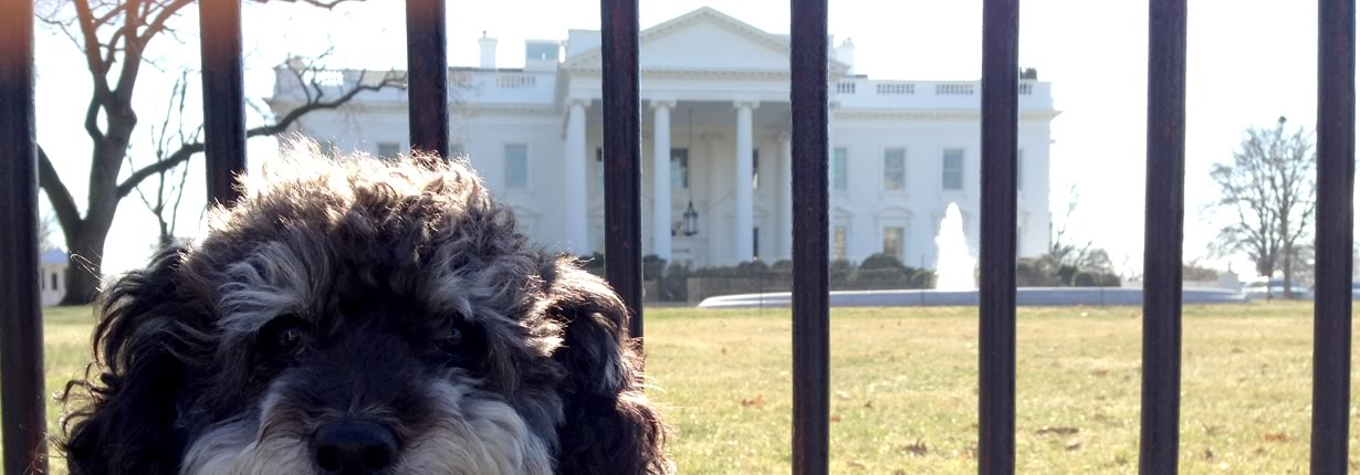 willie at the white house