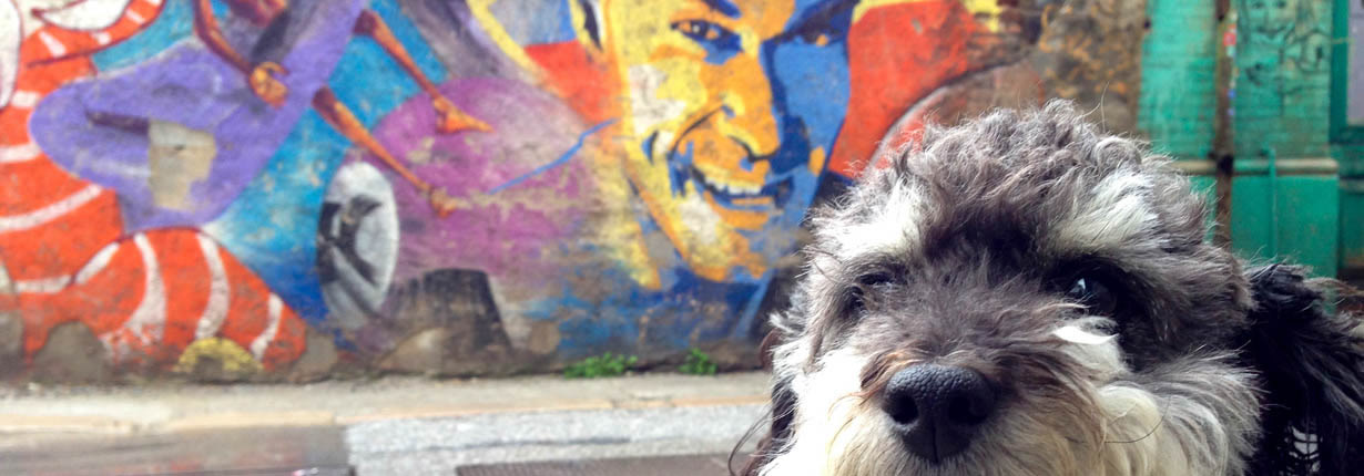 willie loves the graffiti of Granada spain