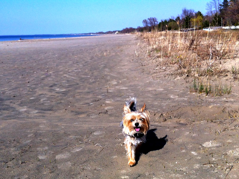 Bossi on Wasaga Beach