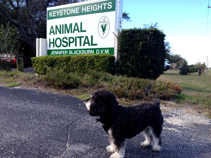 Willie outside of Keystone Heights Animal Hospital