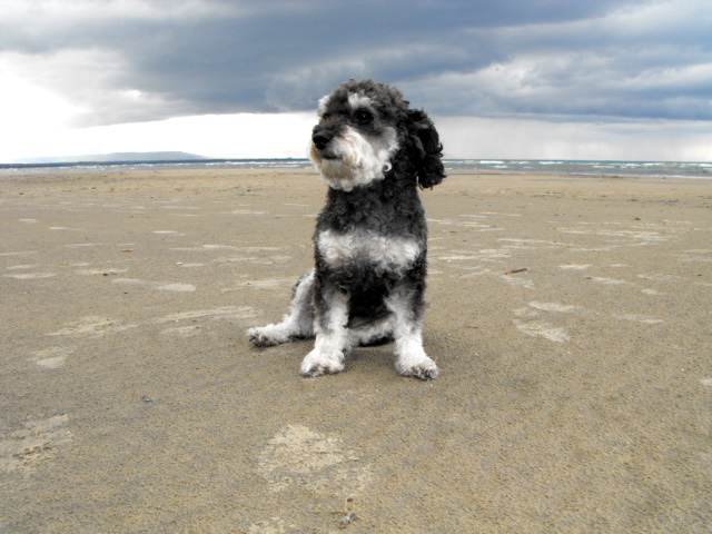 Willie spend some time on Wasaga Beach before taking a road trip south