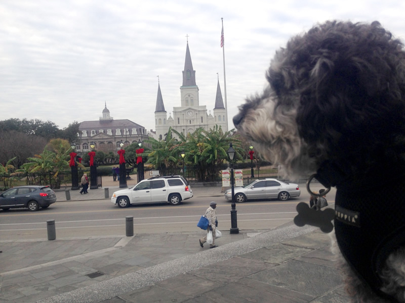 Overlooking Jackson Square Park