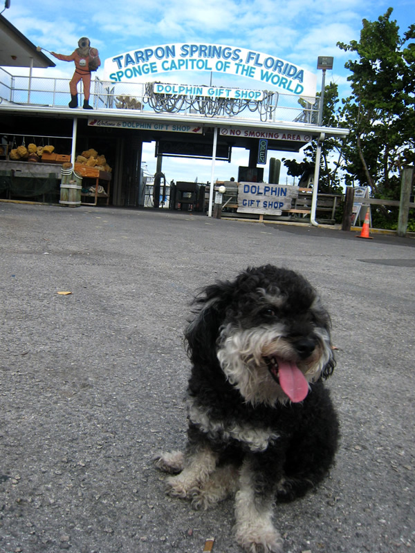 Willie visits the sponge docks of Tarpon Springs, Florida