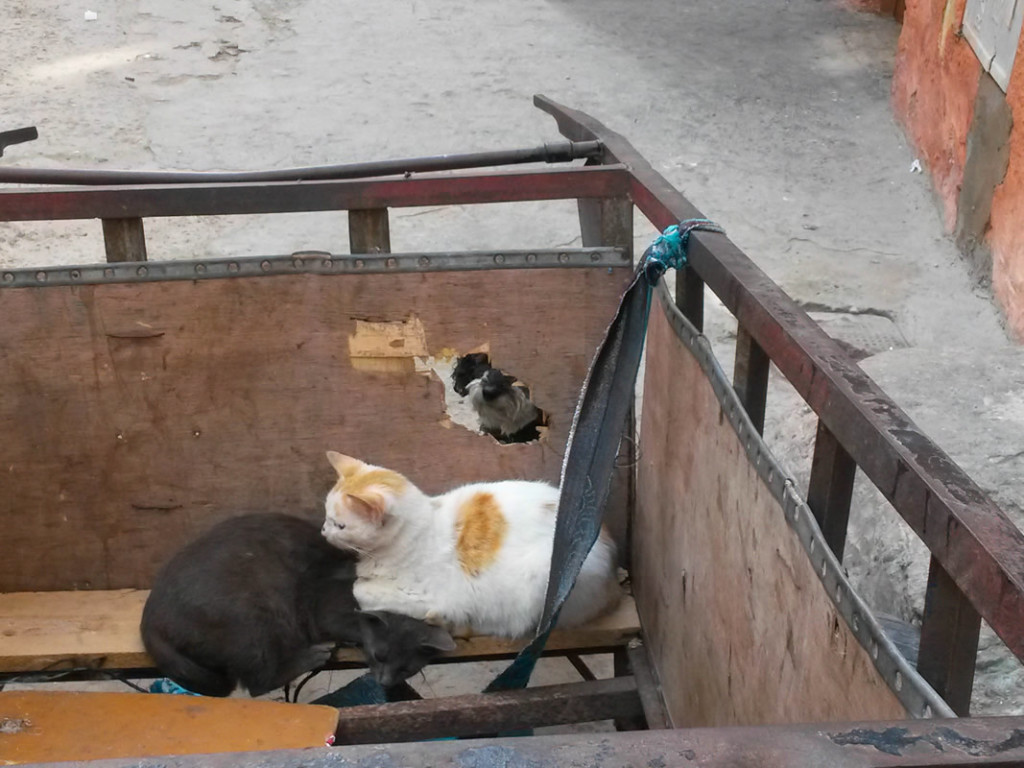 Willie peeks in on stray cats in El Jadida Morocco