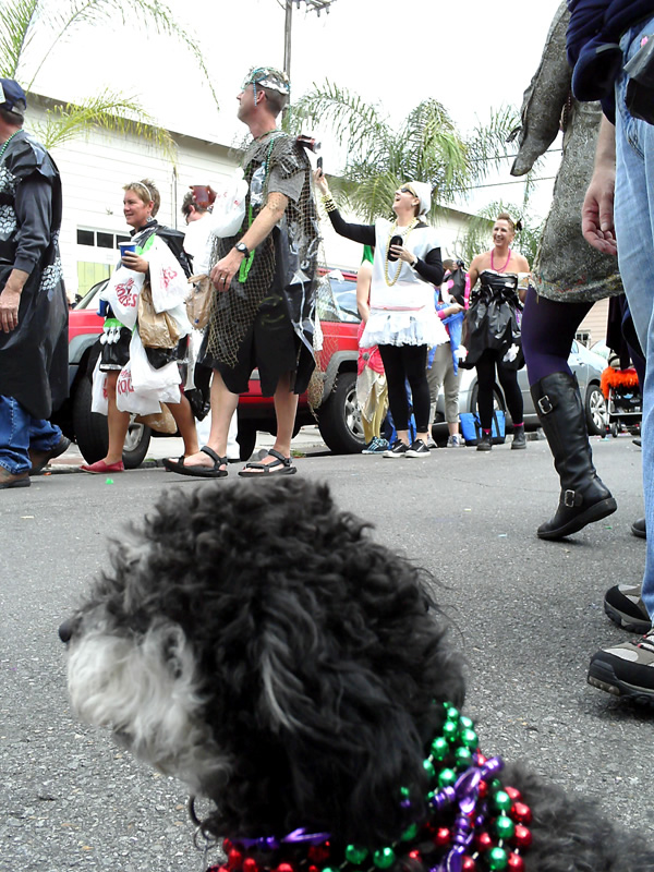 Willie watches the Mardi Gras parade on Burgundy