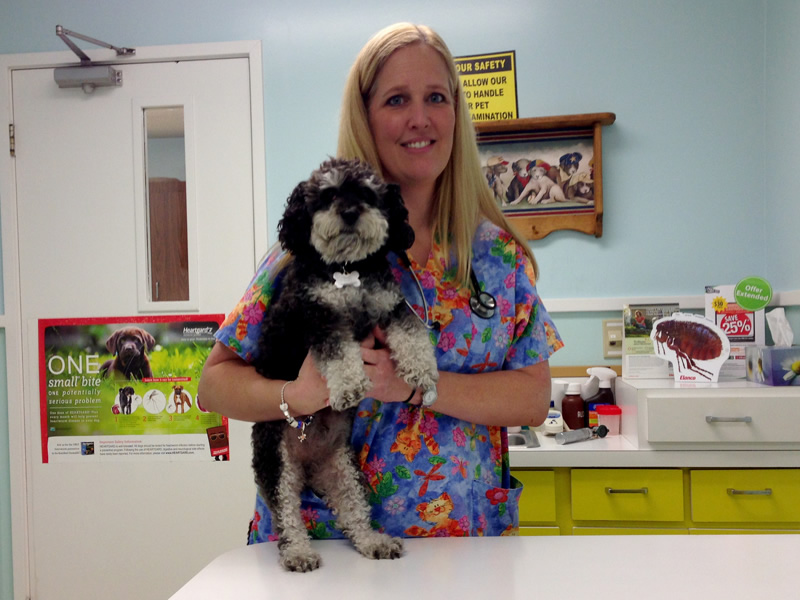 Willie after his check up with Dr. Jennifer Blackburn in Keystone Heights Florida