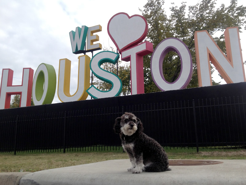 Willie poses in front of the We love Houston sign