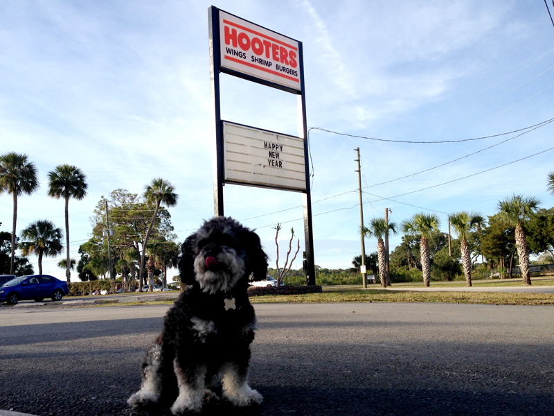 Willie outside Hooters of Port Richey Florida
