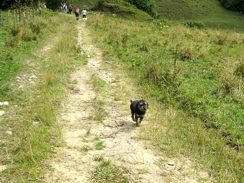 Willie hikes up the mountain in Medellin Colombia