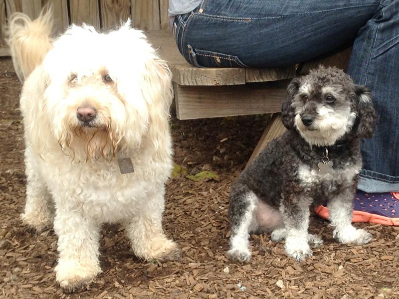 With my new friend birdie at The Boneyard Dog Park & Drinkery