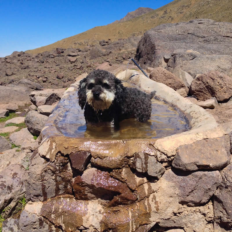 Willie hikes up the Atlas Mountains in Imlil Morocco and then cools off in a natural freshwater spring