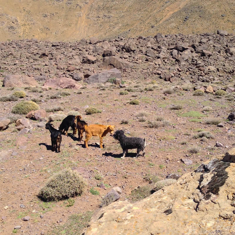 Willie hikes up the Atlas Mountains in Imlil Morocco and meets wild animals