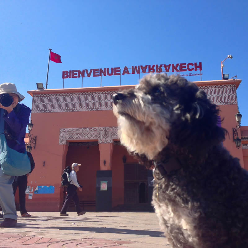 Willie poses in front of the welcome sign in Marrakesh Morocco