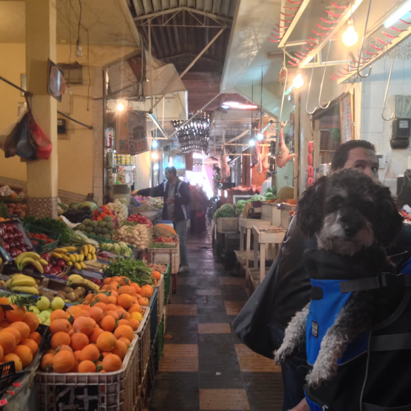 Willie at the farmers market in Marrakesh Morocco