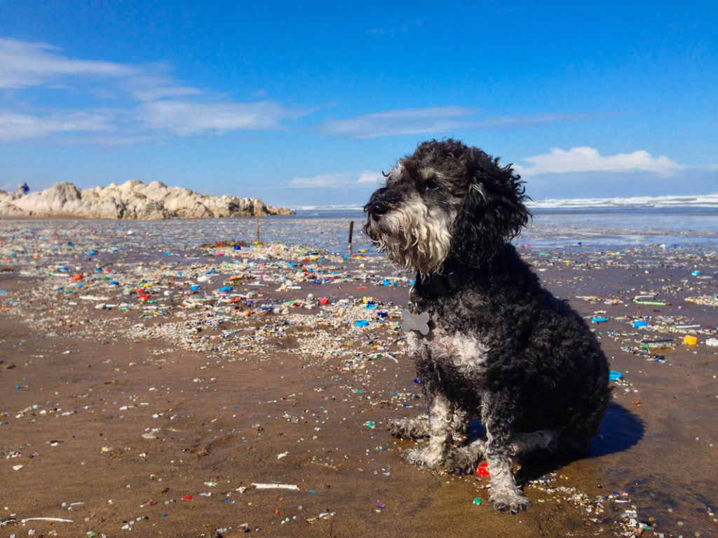 Willie sits among washed up garbage on a beach in Casablanca Morocco