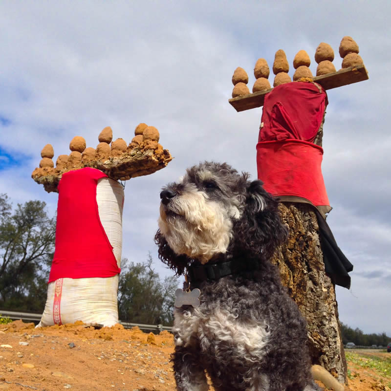 Willie with truffles for sale on the side of the highway in Morocco