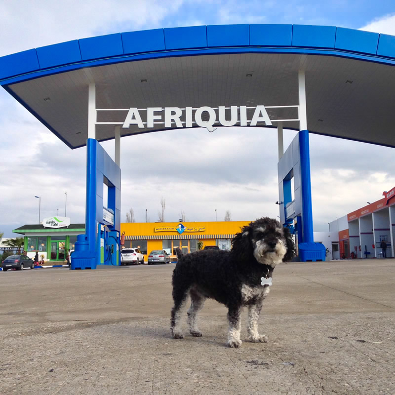 Willie stops at Afriquia gas station in Morocco