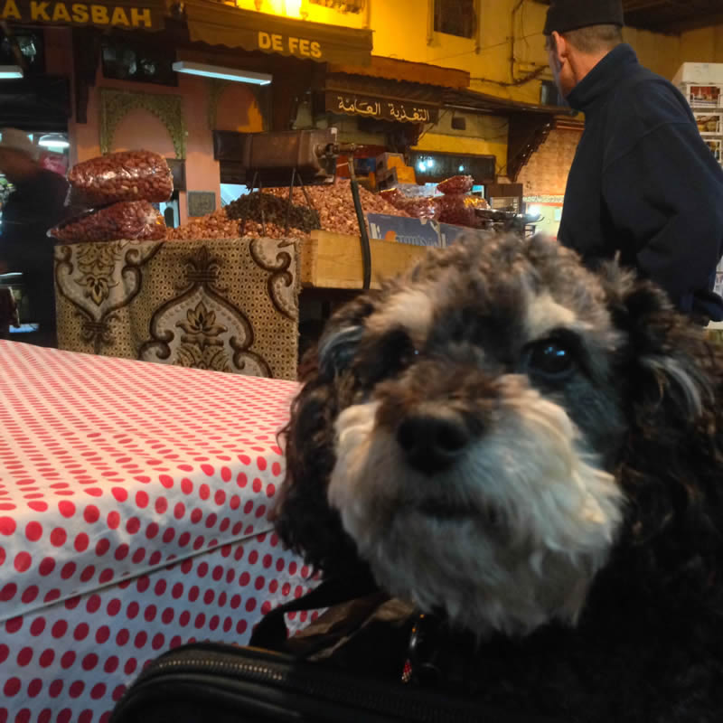 Willie waits for dinner in Fes Morocco