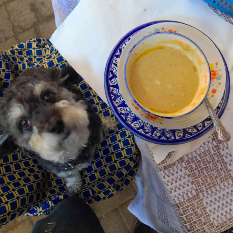 Willie looks to get some bessara - a Moroccan split pea soup in Fes Morocco