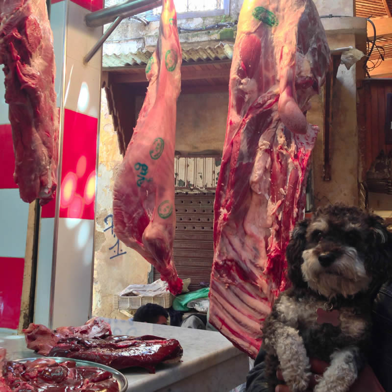 Willie in the Farmers Market of Fes Morocco