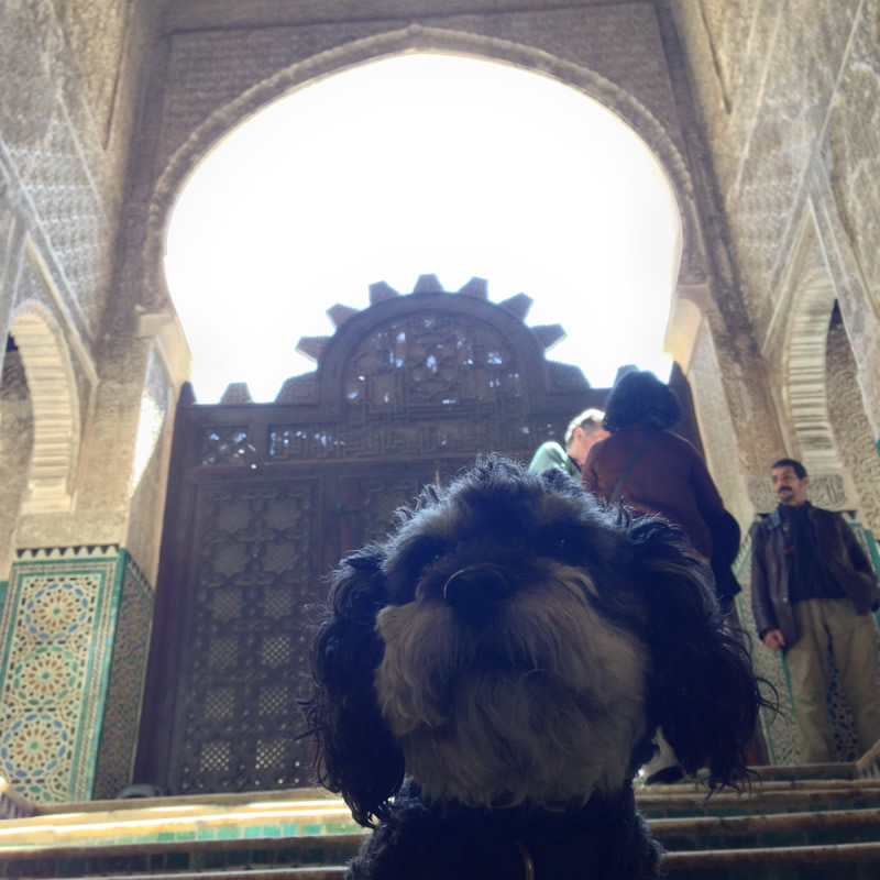 Willie sits outside a mosque in Fes Morocco