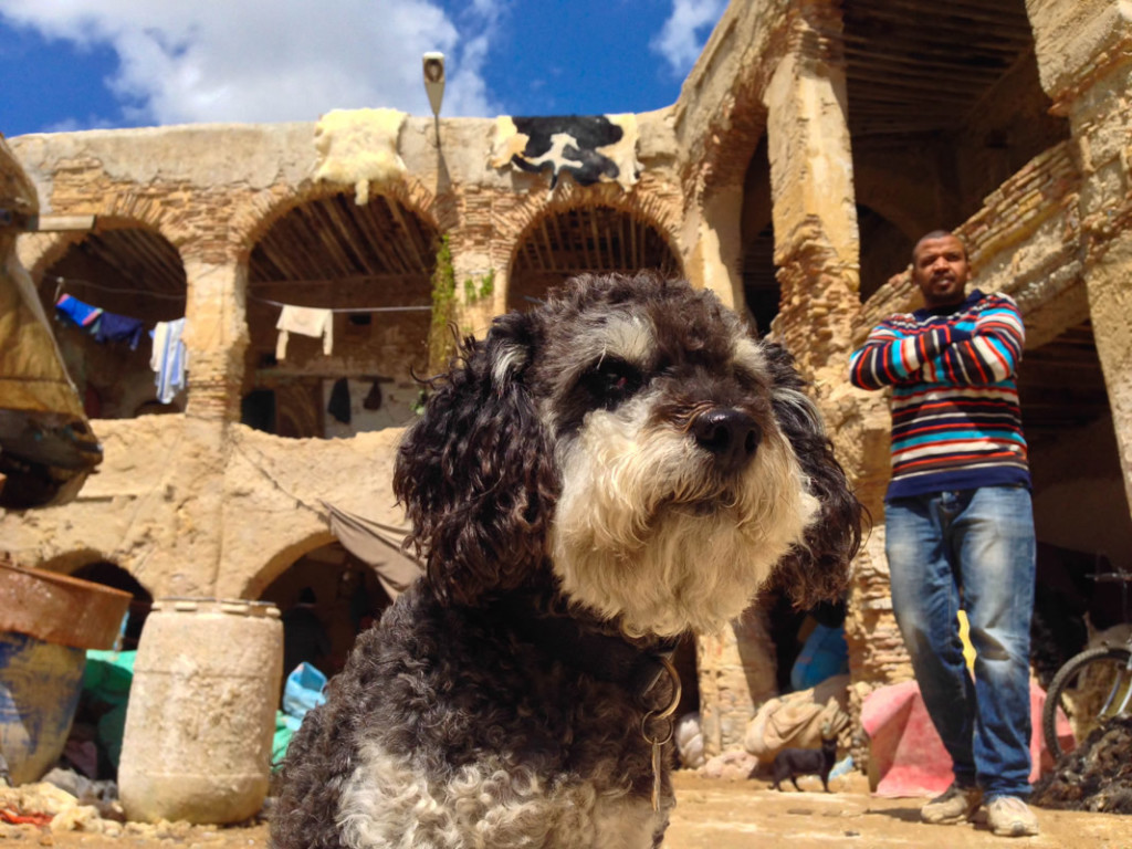 Willie at the oldest leather tannery in the world in Fes Morocco