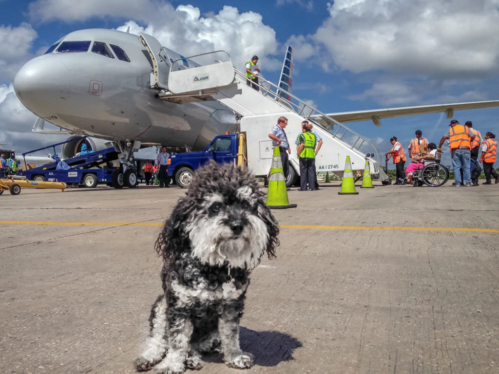 Willie steps off the plane at Belize City Airport