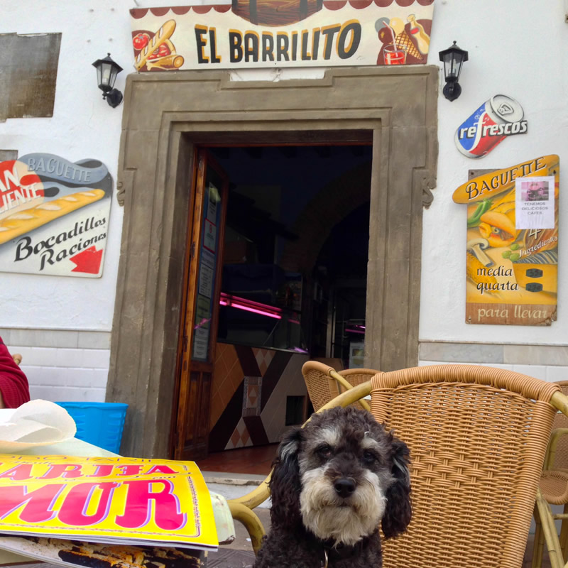 Willie waits for Breakfast in Tarifa Spain