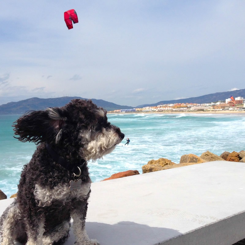 Willie watches the surfers on the coast of Spain in Tarifa