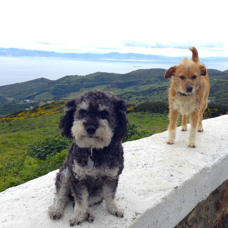 Willie on his way out of Tarifa Spain with his new friend