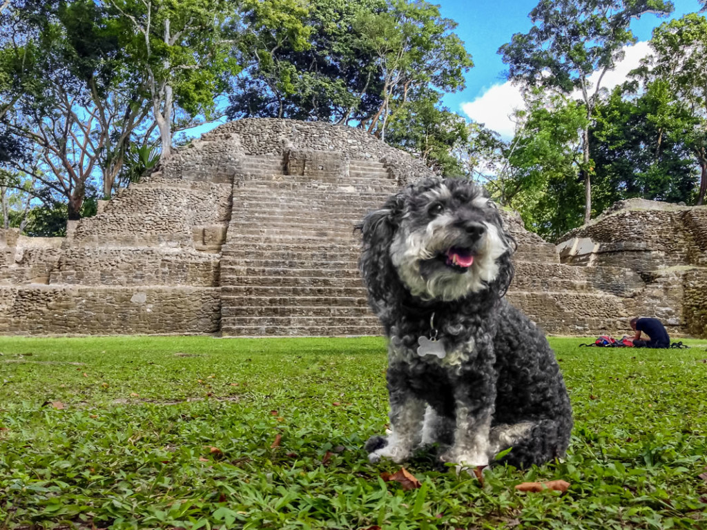 Willie at the Cahal Pech Mayan Ruins in San Ignacio Belize