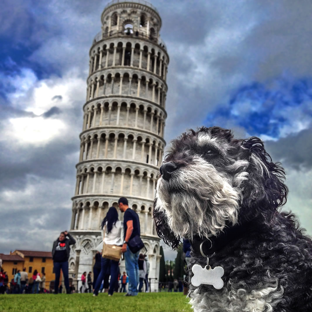 Willie at the Leaning Tower of Pisa in Italy