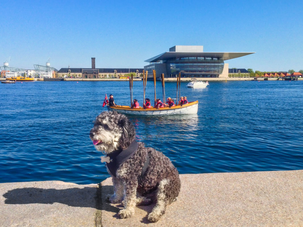 Willie at the Copenhagen Opera House in Denmark
