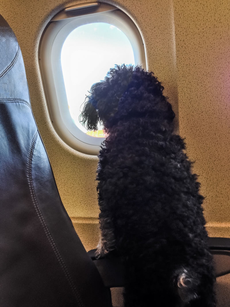 Willie looks out the plane window on his arrival in Belize