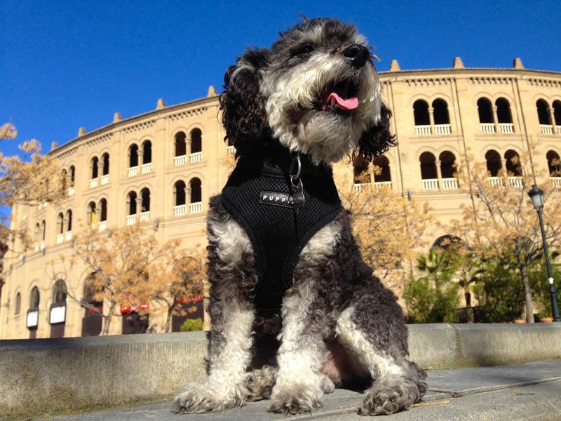 Bullring in Granada Spain