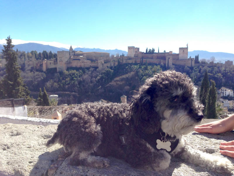 Willie at the Alhambra Palace in Granada Spain