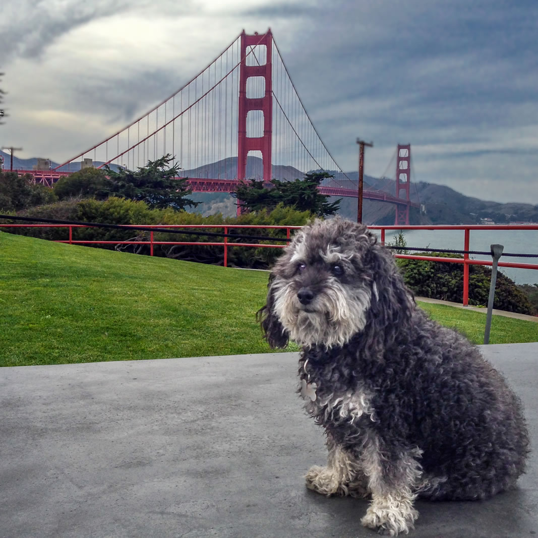 Willie in front of The Golden Gate Bridge in San Francisco California