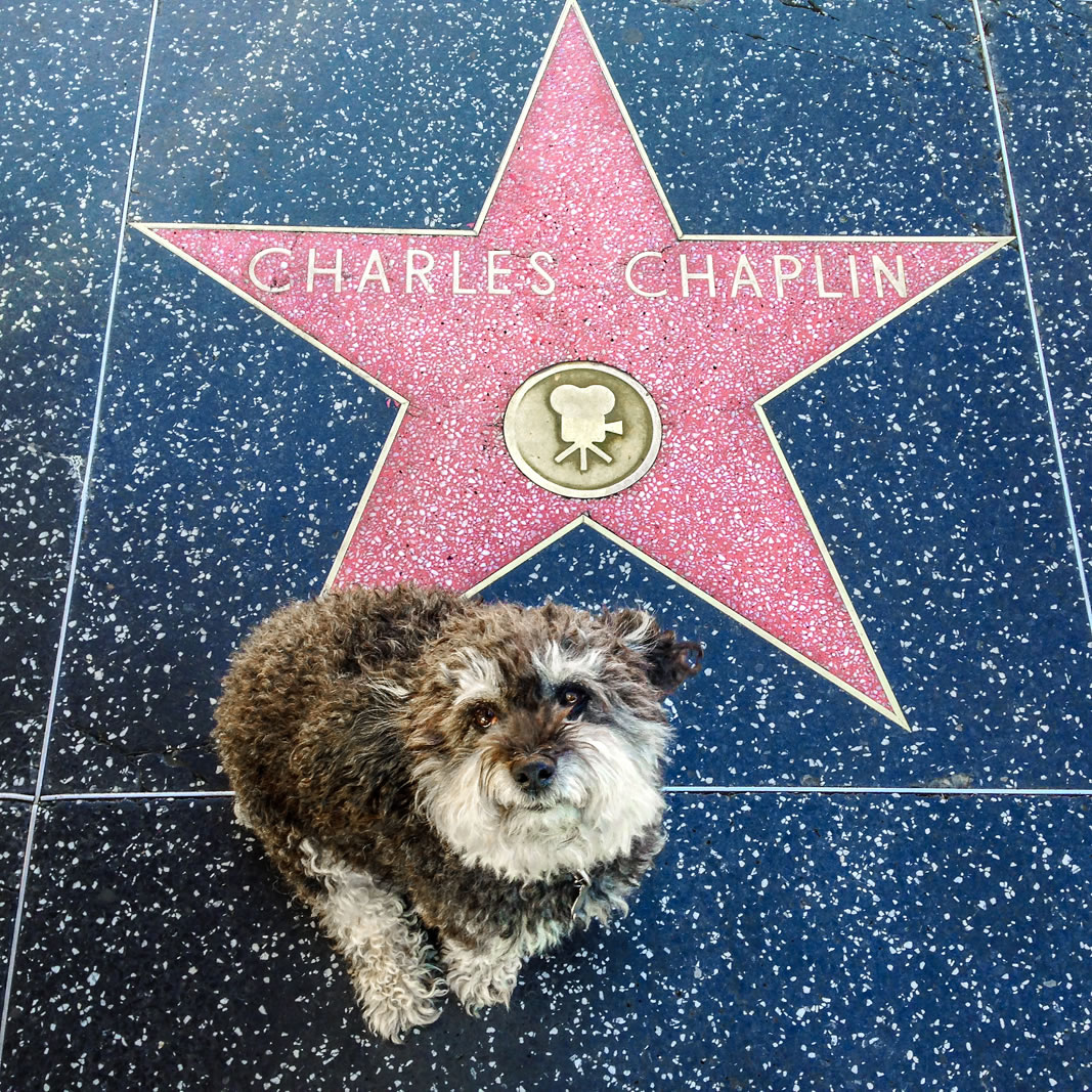 Willie at Charlie Chaplin's star on the Hollywood Walk of Fame
