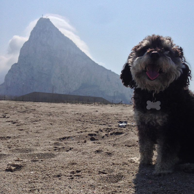 Willie spends an afternoon at the Rock of Gibraltar