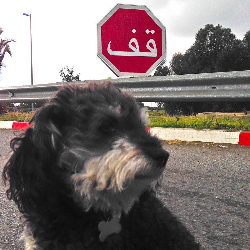 Willie at a stop sign in Morocco