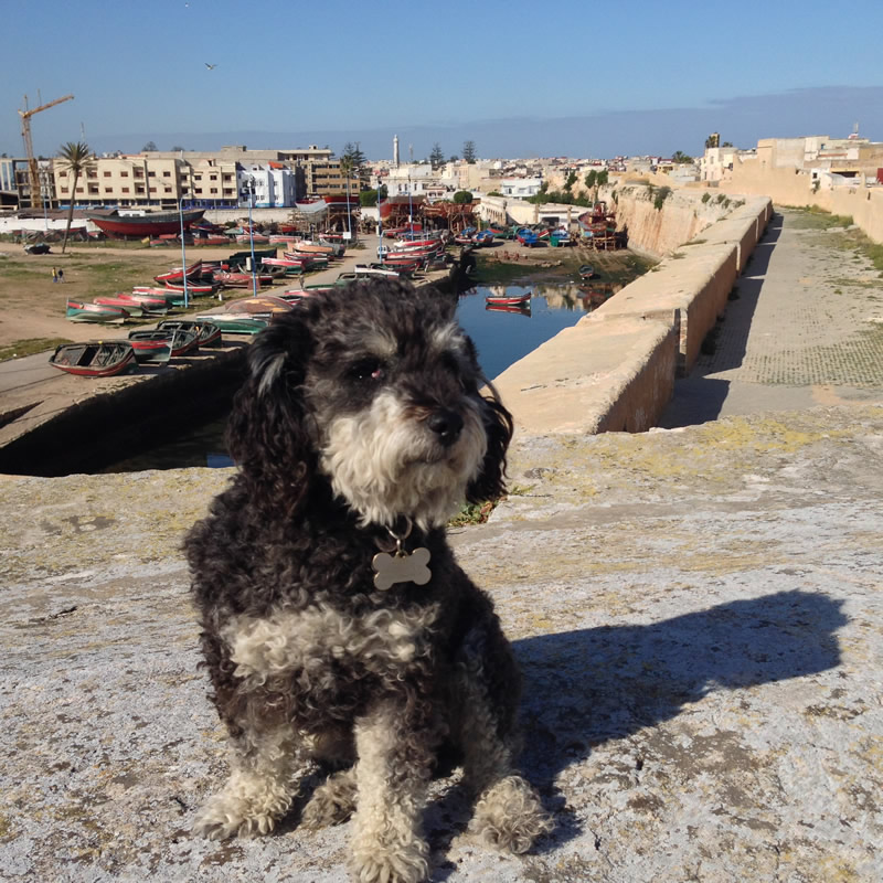 Willie sitting on top of the old city wall in El Jadida Morocco
