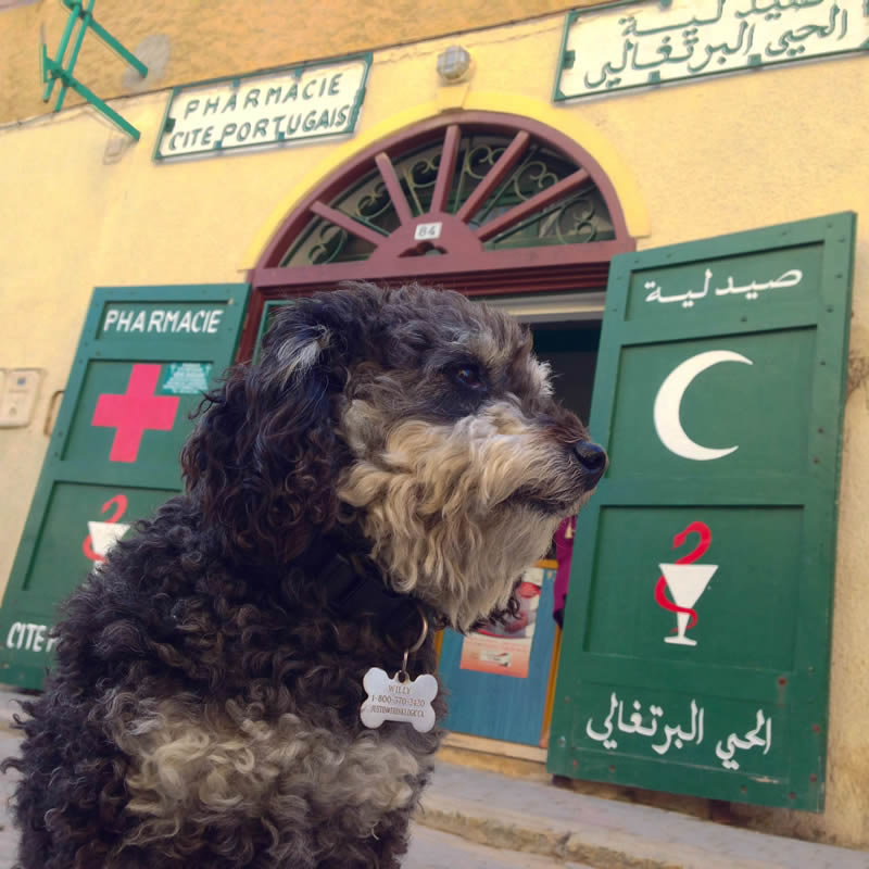 Willie in front of a pharmacy in El Jadida Morocco