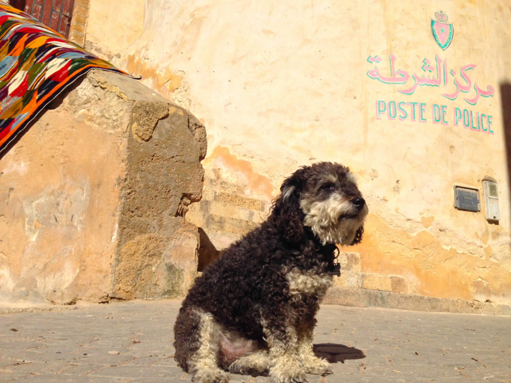 Willie in front of the Police Station in El Jadida Morocco