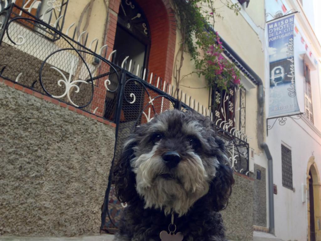 Willie in front of Maison d'hotes de la cite portugaise in El Jadida Morocco