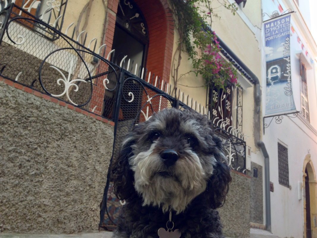 Willie in front of Maison d'hotes de la cite portugaise in El Jadida Morocco
