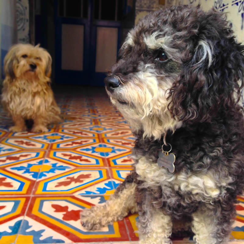 Willie with his new friend Whiskey in El Jadida Morocco