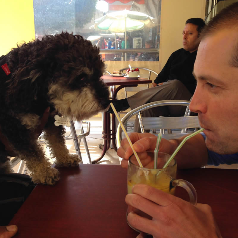 Sharing a smoothie with Tamsi in El Jadida Morocco