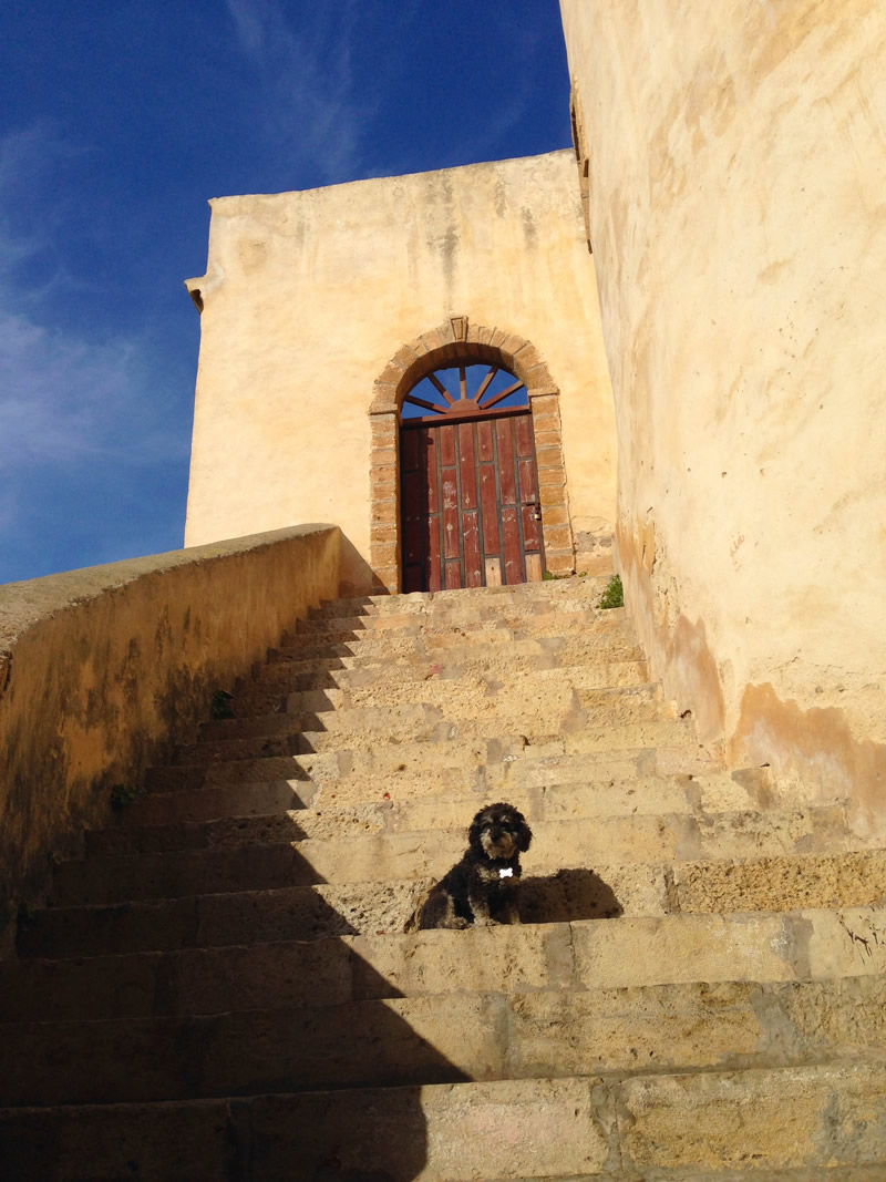 Willie in  El Jadida Morocco